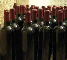 El despertar del vino en Cuba