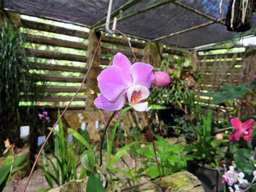 botanicos-flores