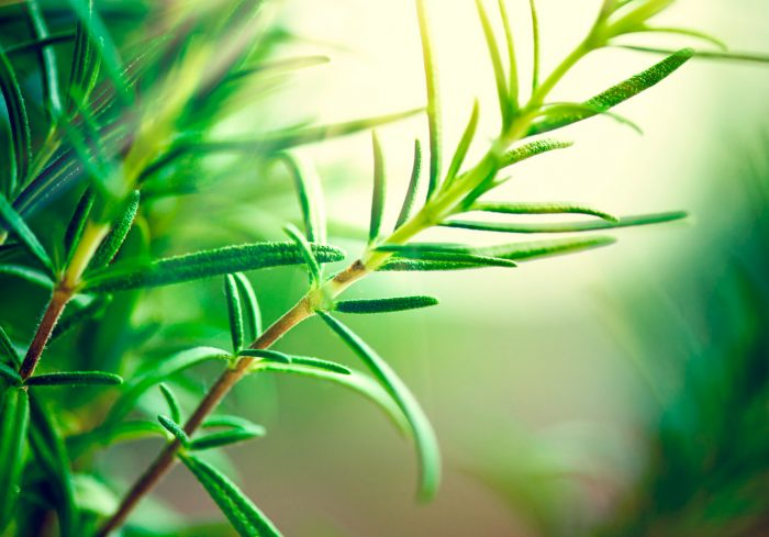 te verde hojas - 10 remedios caseros contra los Melanomas