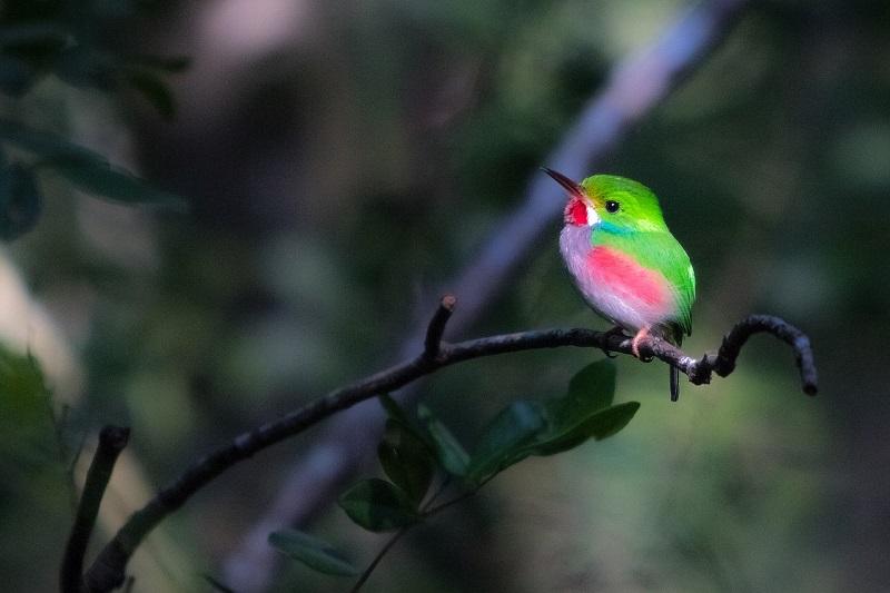 Festival de las Aves Endémicas del Caribe